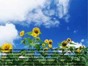 Название произошло от сочетания двух греческих слов 'helios' — солнце и 'anth