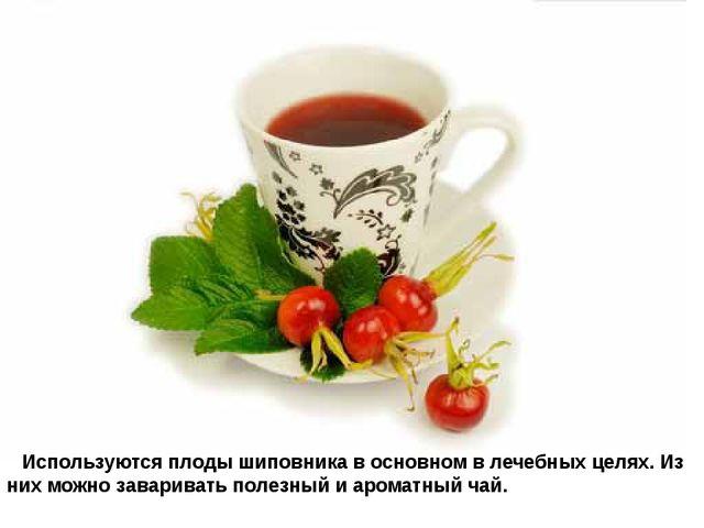 Используются плоды шиповника в основном в лечебных целях. Из них можно зав...