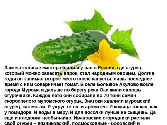 Замечательные мастера были и у нас в России, где огурец, который можно запаса...