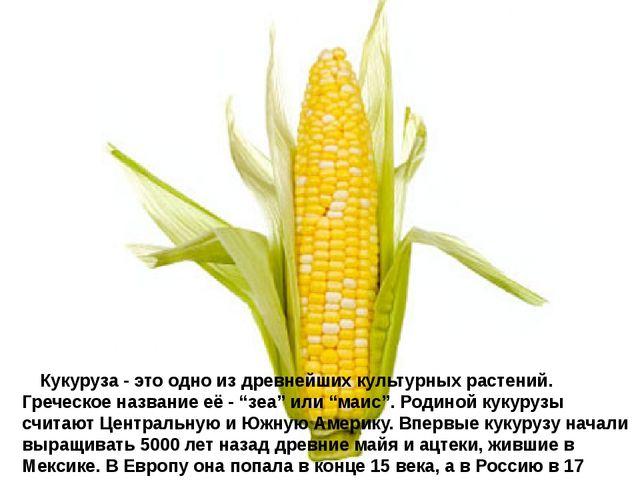Кукуруза - это одно из древнейших культурных растений. Греческое название...
