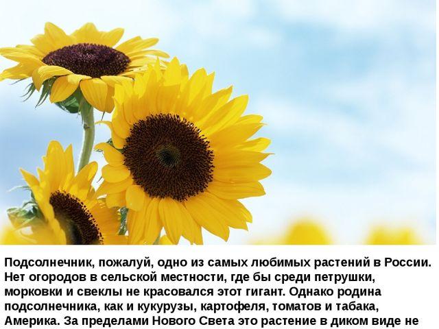 Подсолнечник, пожалуй, одно из самых любимых растений в России. Нет огородов...