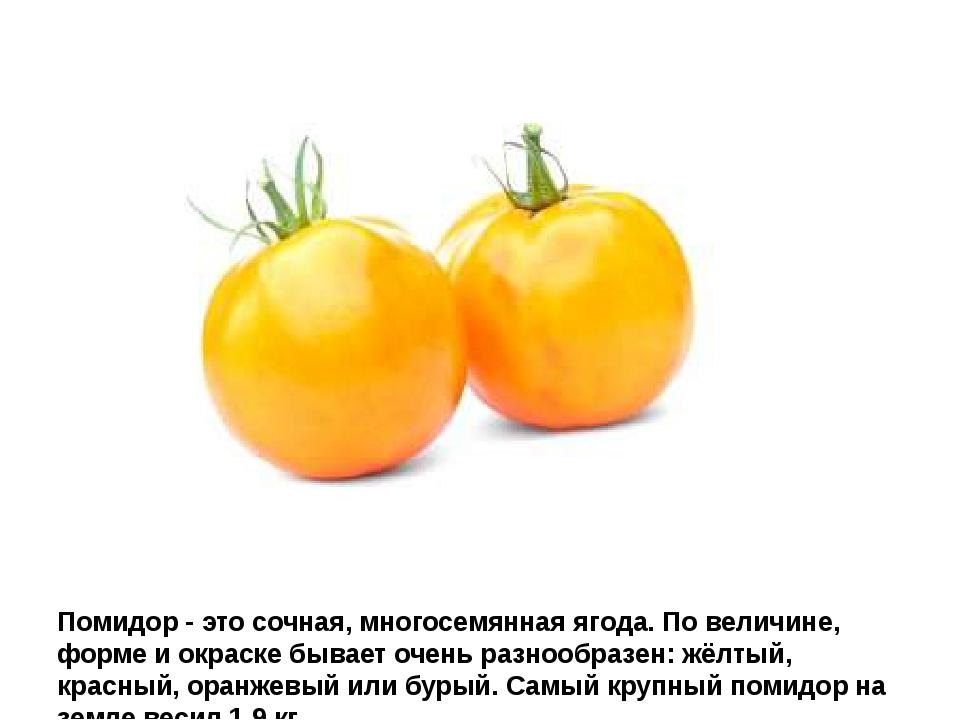 Помидор - это сочная, многосемянная ягода. По величине, форме и окраске бывае...