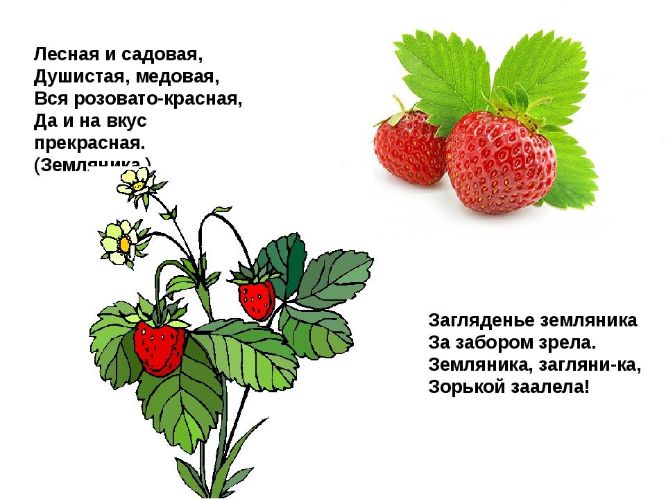 Лесная и садовая, Душистая, медовая, Вся розовато-красная, Да и на вкус прекр...