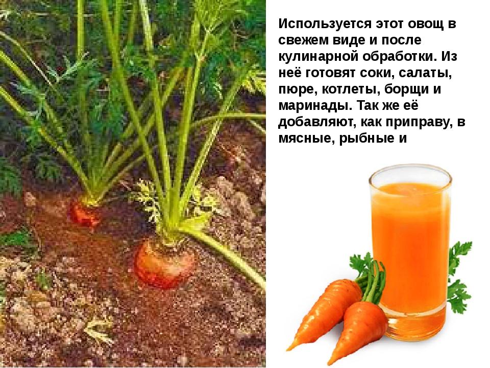 Используется этот овощ в свежем виде и после кулинарной обработки. Из неё гот...