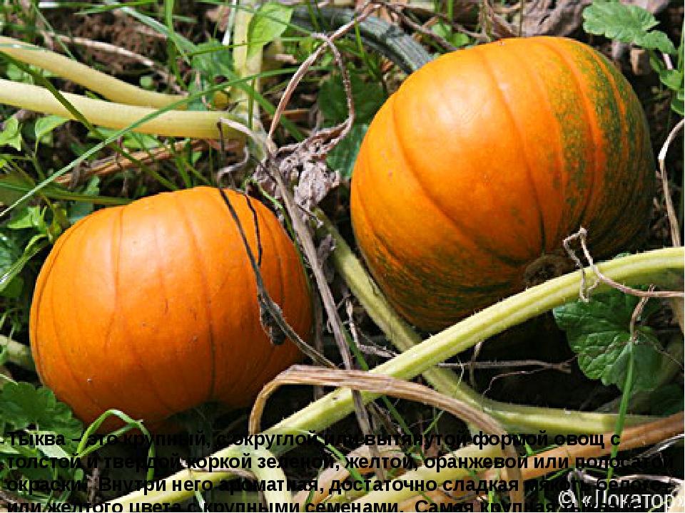 Тыква – это крупный, с округлой или вытянутой формой овощ с толстой и твердой...