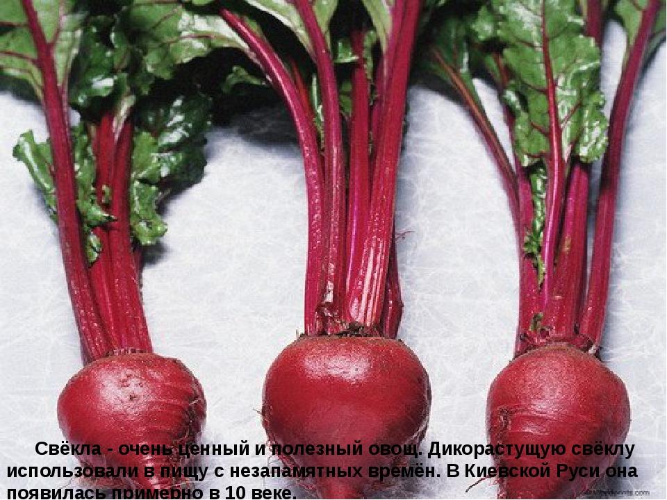 Свёкла - очень ценный и полезный овощ. Дикорастущую свёклу использовали...