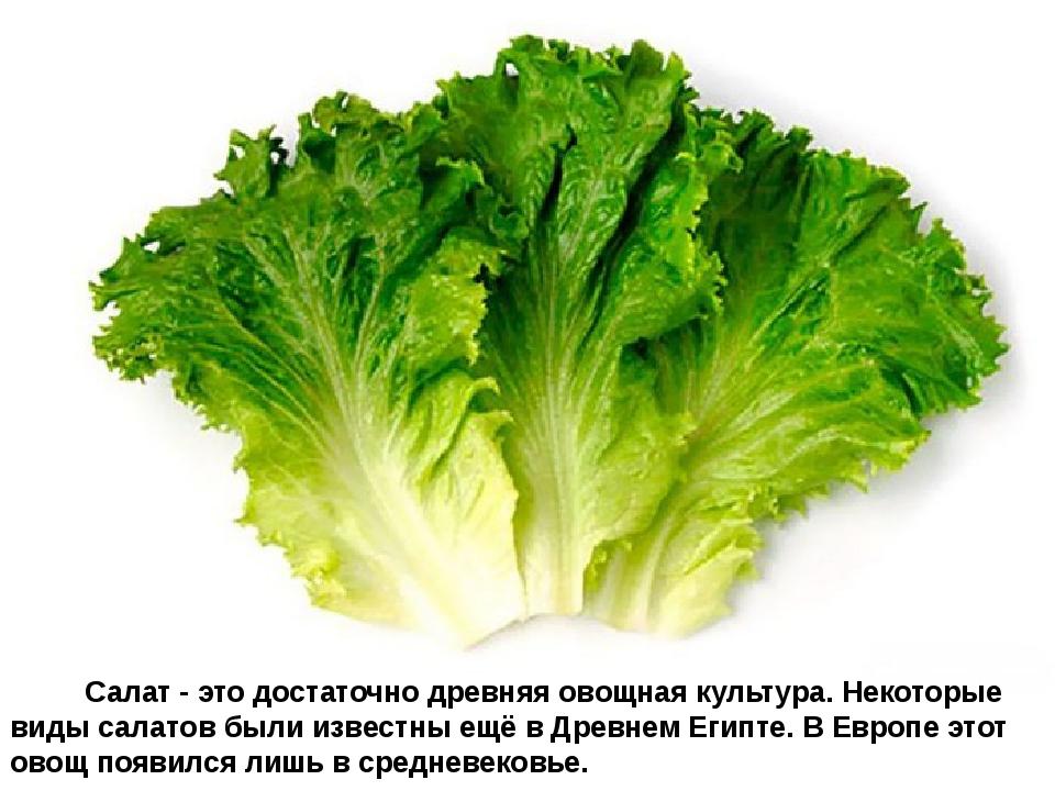 Салат - это достаточно древняя овощная культура. Некоторые виды сал...