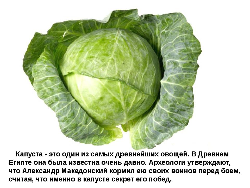 Капуста - это один из самых древнейших овощей. В Древнем Египте она была...
