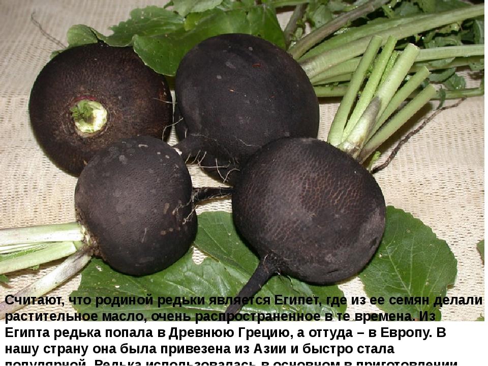 Считают, что родиной редьки является Египет, где из ее семян делали раститель...