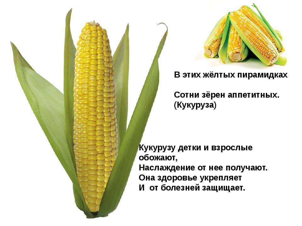 В этих жёлтых пирамидках Сотни зёрен аппетитных. (Кукуруза) Кукурузу детки и...