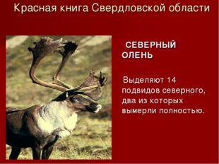 Красная книга Свердловской области СЕВЕРНЫЙ ОЛЕНЬ Выделяют 14 подвидов север