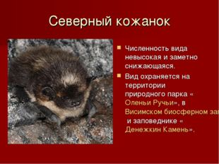 Северный кожанок Численность вида невысокая и заметно снижающаяся. Вид охраня