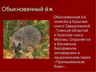 Обыкновенный ёж Обыкновенный ёж занесён в Красные книгиСвердловской,Томской
