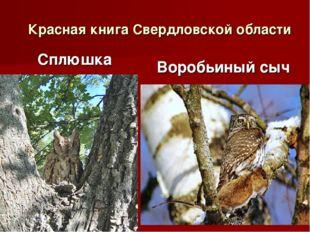 Красная книга Свердловской области Сплюшка Воробьиный сыч