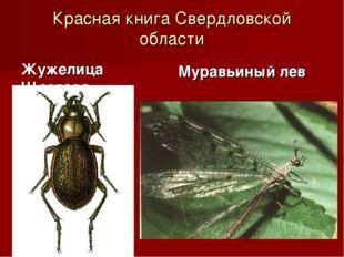 Красная книга Свердловской области Жужелица Щеглова Муравьиный лев