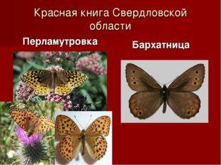Красная книга Свердловской области Перламутровка Бархатница