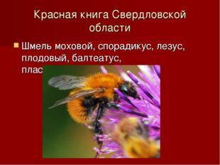 Красная книга Свердловской области Шмель моховой, спорадикус, лезус, плодовый