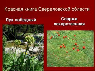 Красная книга Свердловской области Лук победный Спаржа лекарственная
