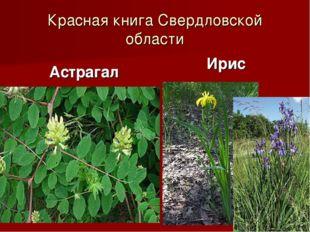 Красная книга Свердловской области Астрагал Ирис