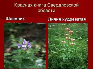 Красная книга Свердловской области Шлемник приземистый Лилия кудреватая
