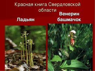 Красная книга Свердловской области Ладьян Венерин башмачок