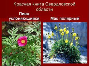 Красная книга Свердловской области Пион уклоняющийся Мак полярный