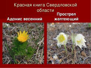Красная книга Свердловской области Адонис весенний Прострел желтеющий