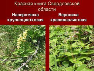 Красная книга Свердловской области Наперстянка крупноцветковая Вероника крапи