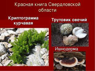 Красная книга Свердловской области Криптограмма курчавая Трутовик овечий Ишно