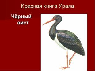 Красная книга Урала Чёрный аист