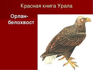 Красная книга Урала Орлан-белохвост