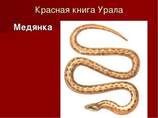 Красная книга Урала Медянка