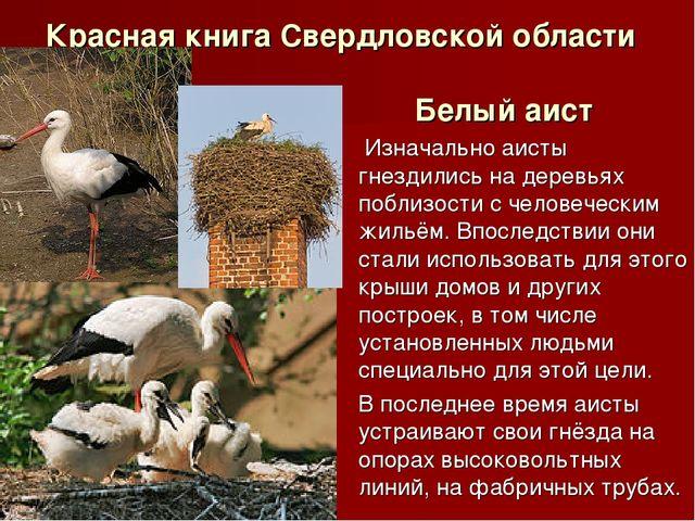Красная книга Свердловской области Белый аист Изначально аисты гнездились на...