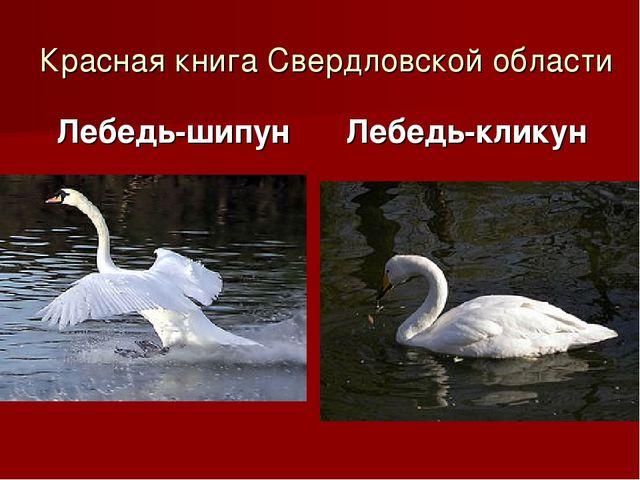 Красная книга Свердловской области Лебедь-шипун Лебедь-кликун