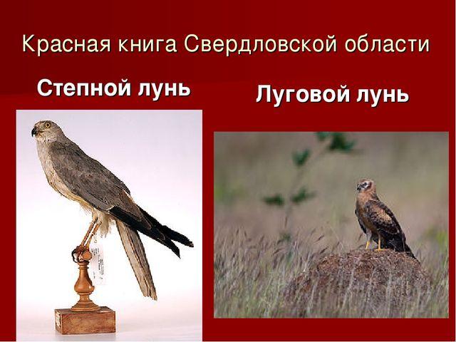 Красная книга Свердловской области Степной лунь Луговой лунь
