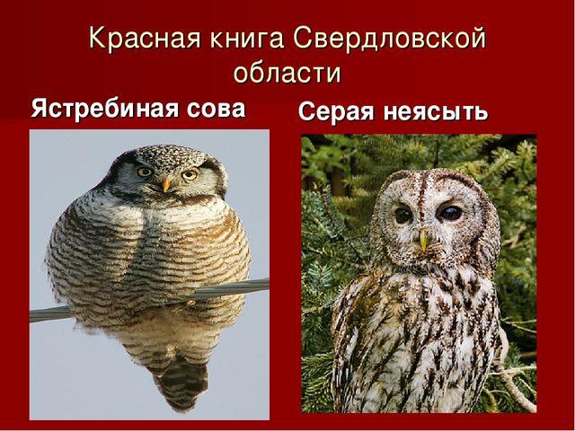 Красная книга Свердловской области Ястребиная сова Серая неясыть