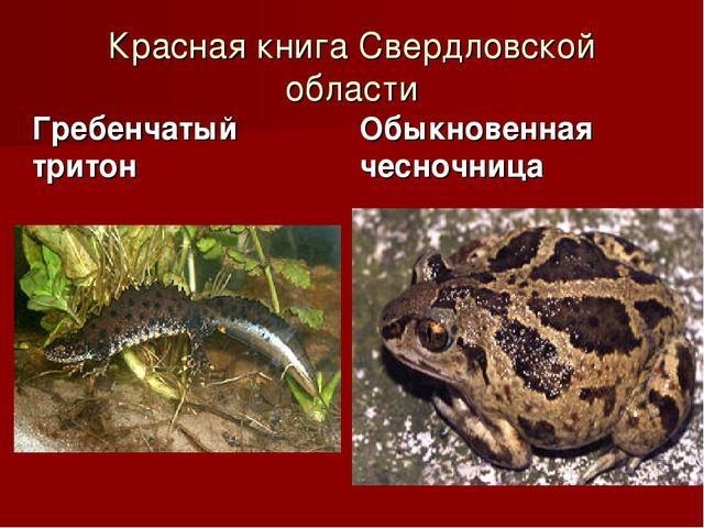 Красная книга Свердловской области Гребенчатый тритон Обыкновенная чесночница