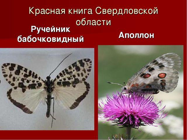 Красная книга Свердловской области Ручейник бабочковидный Аполлон