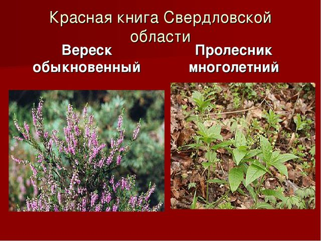 Красная книга Свердловской области Вереск обыкновенный Пролесник многолетний