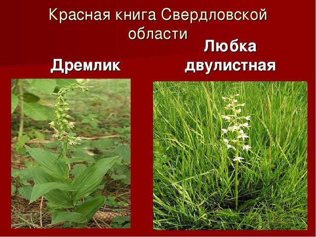 Красная книга Свердловской области Дремлик Любка двулистная