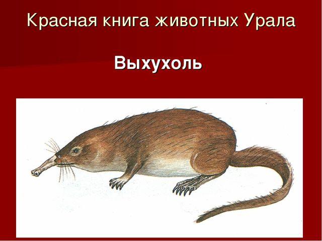 Красная книга животных Урала Выхухоль