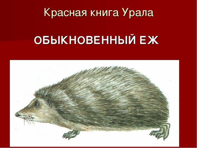Красная книга Урала ОБЫКНОВЕННЫЙ ЕЖ