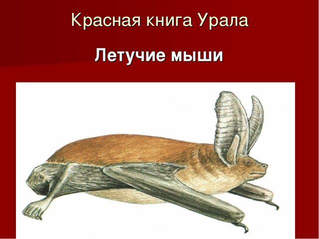 Красная книга Урала Летучие мыши