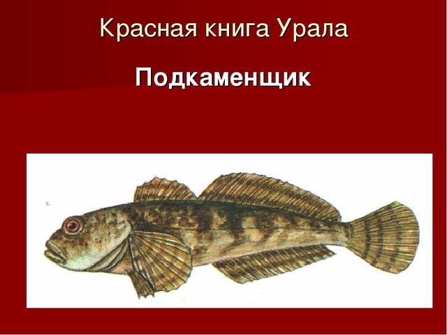 Красная книга Урала Подкаменщик