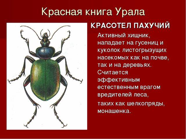 Красная книга Урала КРАСОТЕЛ ПАХУЧИЙ Активный хищник, нападает на гусениц и к...