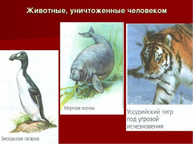 Животные, уничтоженные человеком