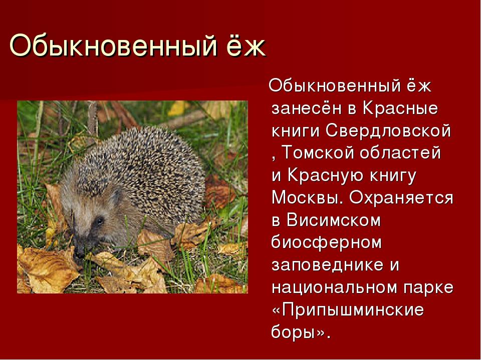 Обыкновенный ёж Обыкновенный ёж занесён в Красные книгиСвердловской,Томской...