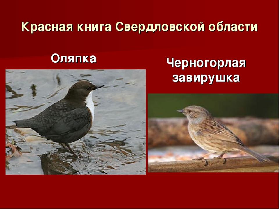 Красная книга Свердловской области Оляпка Черногорлая завирушка