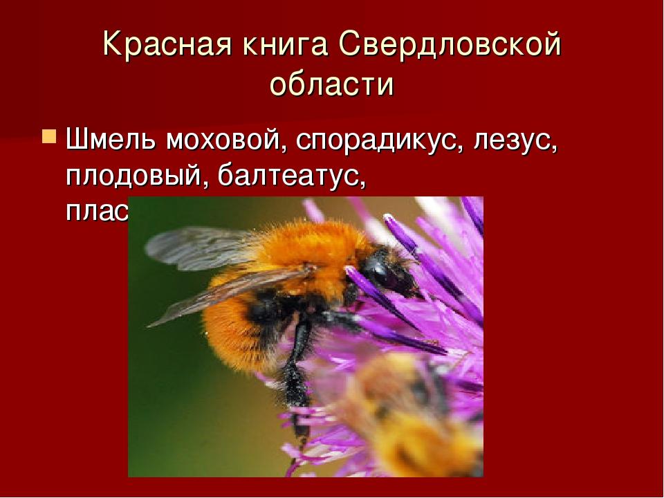 Красная книга Свердловской области Шмель моховой, спорадикус, лезус, плодовый...