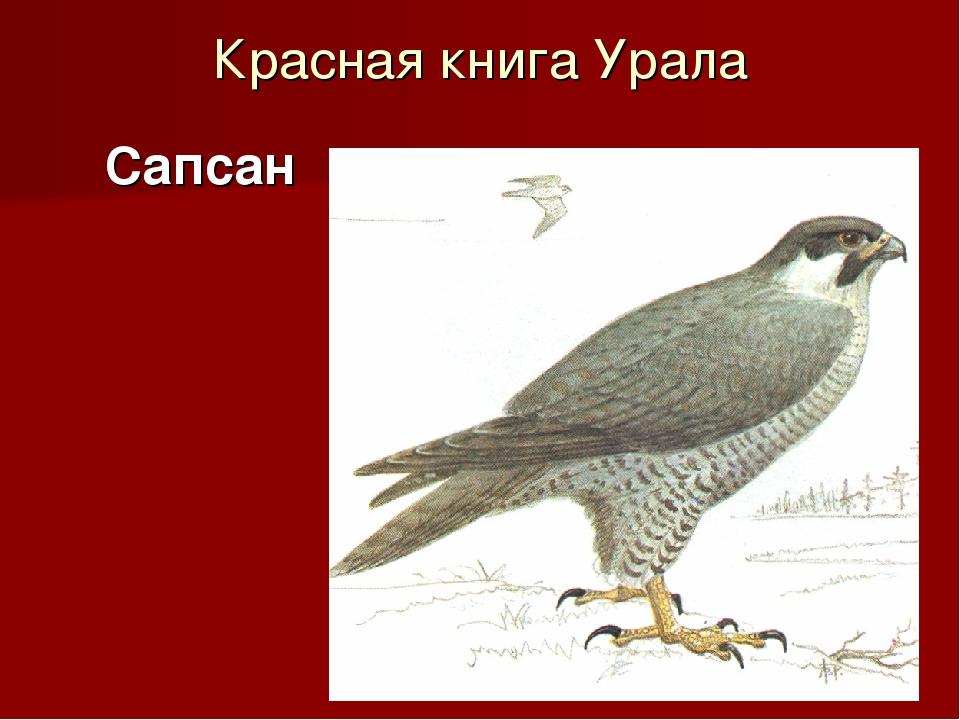 Красная книга Урала Сапсан